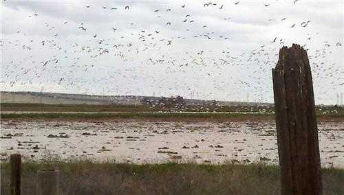 ThursdayWinds pick up and light raindrops fall north of Sacramento just within hours before the second wave moves in. Meanwhile, thousands of birds are on the move -- heading south perhaps?