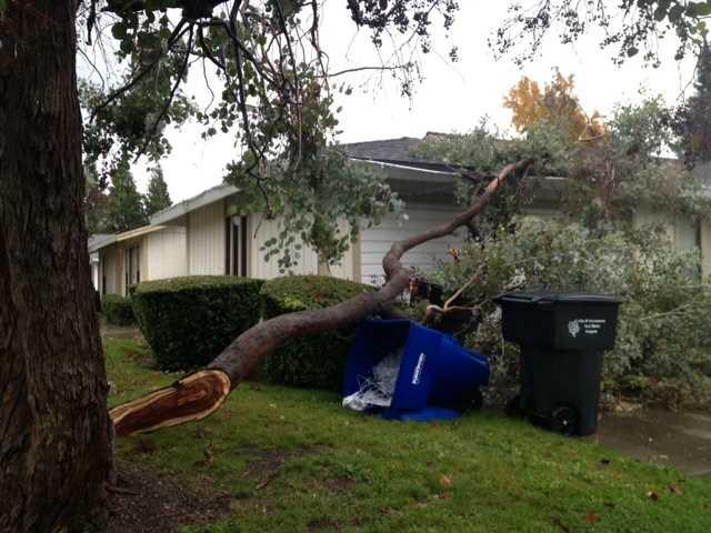 FridayA branch falls on a home.
