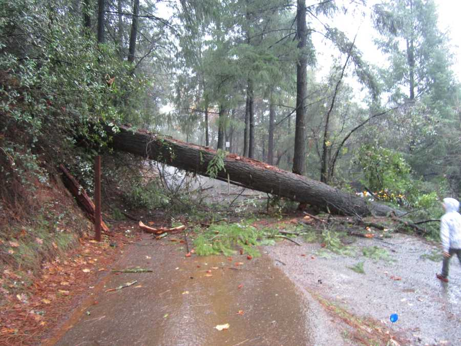 SundayA tree fell across a driveway on Forni Road in Placerville.