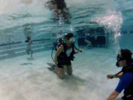 Dolphin SCUBA offers a variety of dive classes and rental equipment.