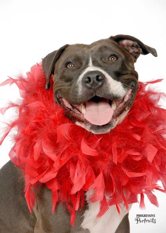 What: Happy Tails Valentine Pet PhotosWhere: Pet Food Express - RosevilleWhen: Sat Noon-4:30pmClick here for more information on this event.