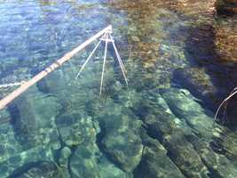 Electrical probes from a boat stun the fish, allowing researchers to survey the fish.