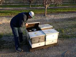 Northern California bee keepers said they have lost half of their bees and can't explain for sure where the bees have gone.