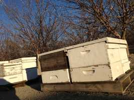 Bee keepers rent hives to growers who place them throughout orchards.