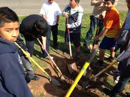The Sacramento Tree Foundation says late fall to the end of March is prime tree-planting season in Sacramento.