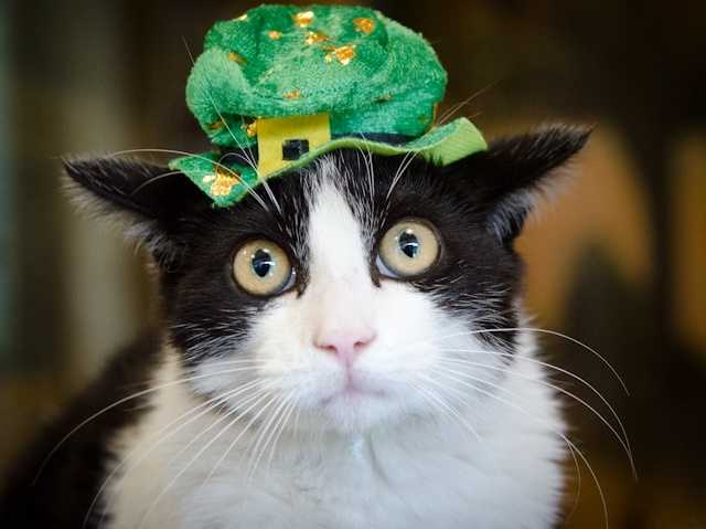 Sacramento animal shelters offer $5 adoptions Friday, Mar. 15 through Sunday, Mar. 17 on all adult cats.
