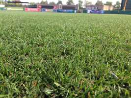 Rye grass flourishes during the cooler months and is replaced with bermuda during the hot summers.
