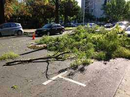 Tree limbs down in at Fifth and P streets in downtown Sacramento.