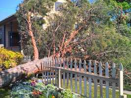 A KCRA Insider sent in this photo of a tree knocked down in Newman by Monday's high winds.