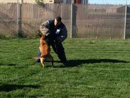 Meet the winners, and their human handlers, from the K-9 trials in Stockton. Dogs from the Sacramento Police Department took home a handful of top honors (April 9, 2013).