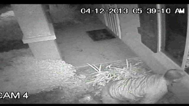 Police in Stockton are trying to identify a man caught on a home-surveillance camera peeking into the window of a child's bedroom early Friday morning.