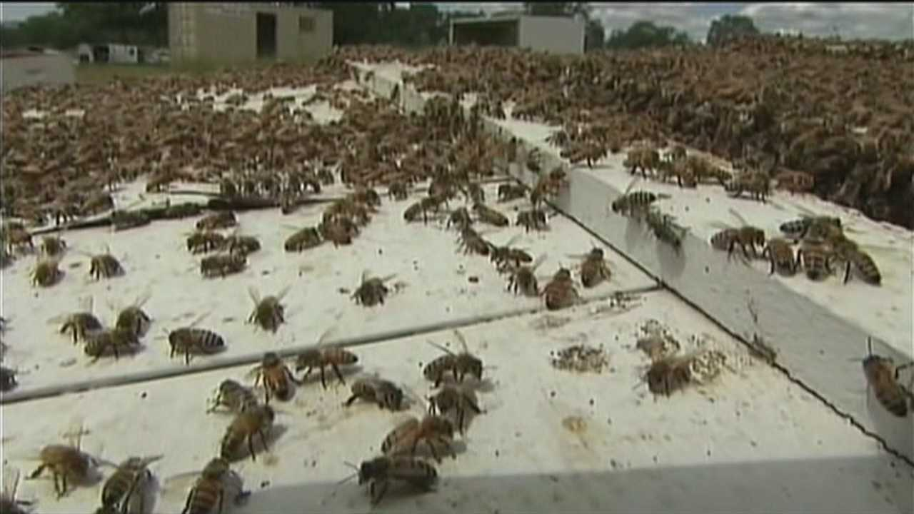 Bees are in high demand to farmers as their numbers decline.