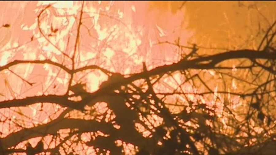 More than 20 acres of the American River Parkway were blackened Wednesday by a wildland fire.