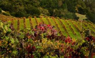 18. Napa produces 5 percent of the United States' wine, which equals about 9.2 million cases of wine per year.