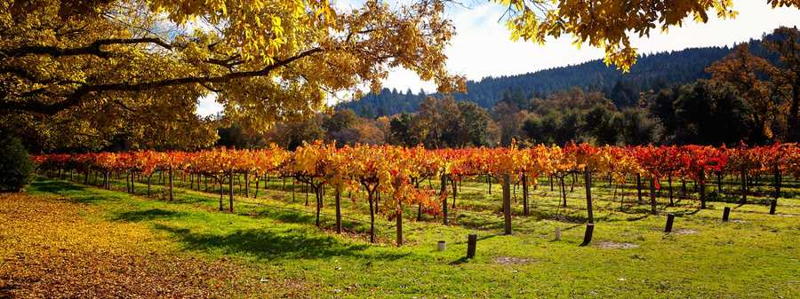 4. Napa Valley is comprised of 14 different subappellations or American viticultural areas.