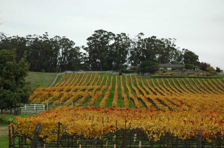 8. Napa is home to more than 300 wineries.