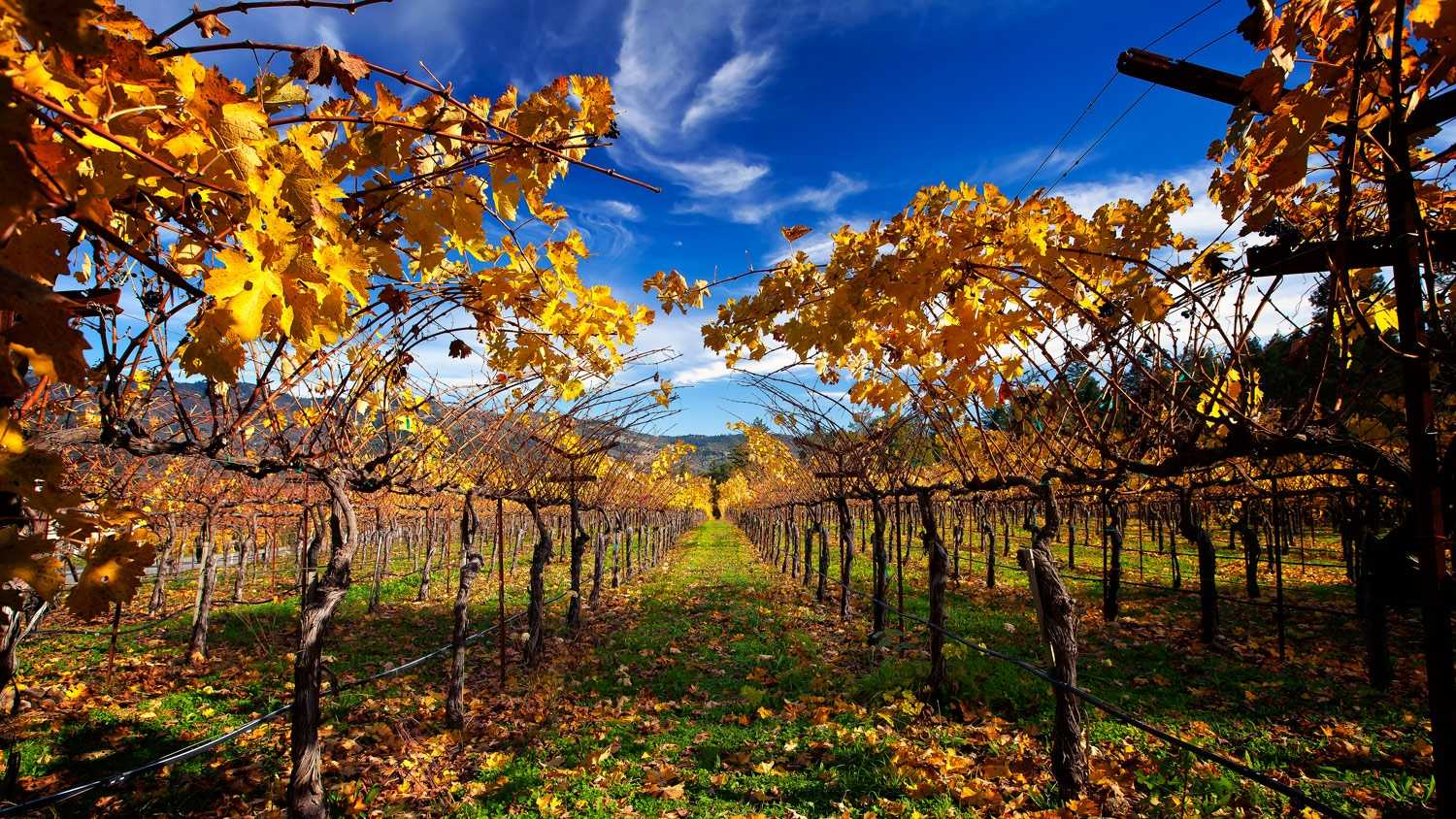 9. Sulfur is the most commonly used pesticide in Napa Valley and is certified for use in organic farming.