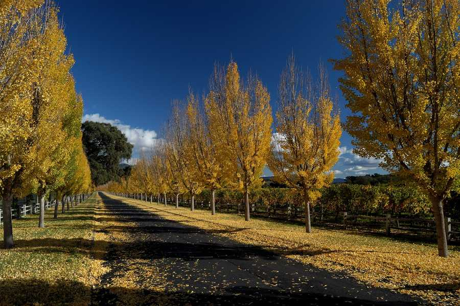 12. More than 10 percent of land in the Napa Valley (more than 53,000 acres) is permanently protected from development.