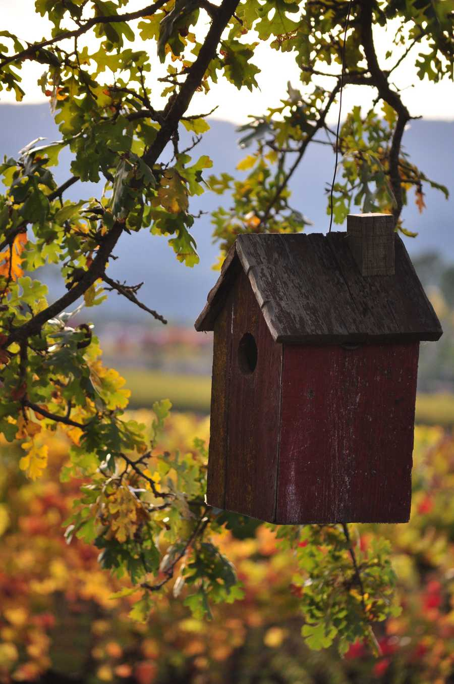 17. The region nets about $10.128 billion annually in gross revenue from its wine.