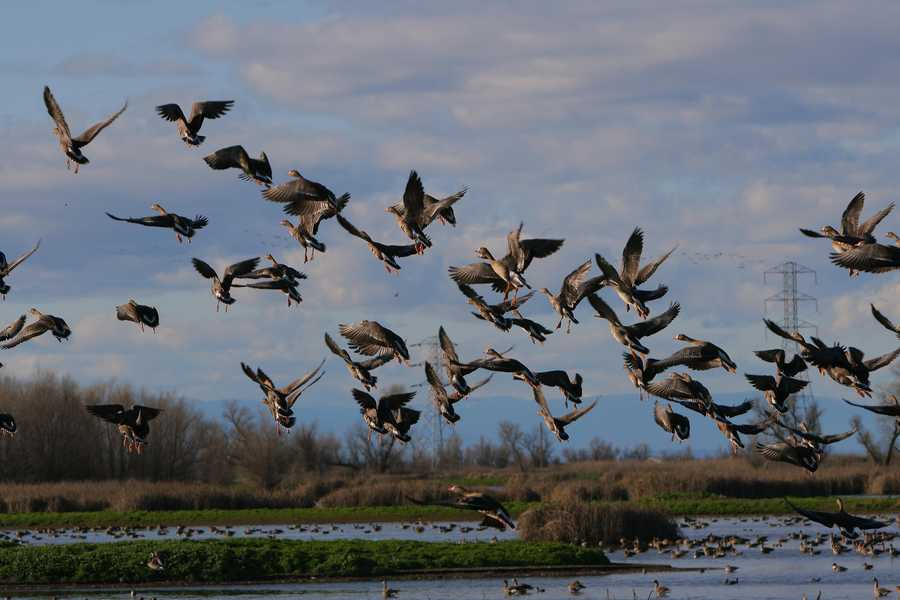 Colusa CountyVisitor-generated sales tax receipts: $1,200,000Things to do: Relax in Colusa County by discovering wildlife at the Colusa National Wildlife Refuge.