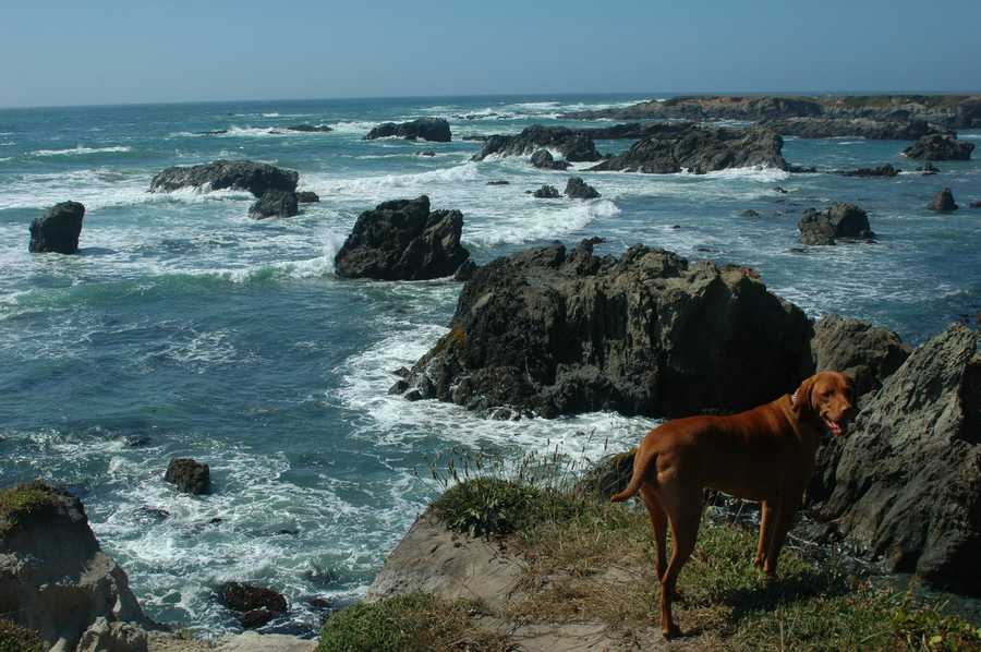 Mendocino CountyVisitor-generated sales tax receipts: $8,200,000Things to do: Dive into history and adventure at Fort Bragg. The bustling town was once a Civil War era fort. This attraction offers picturesque views of the Pacific Ocean and the rugged coastline.