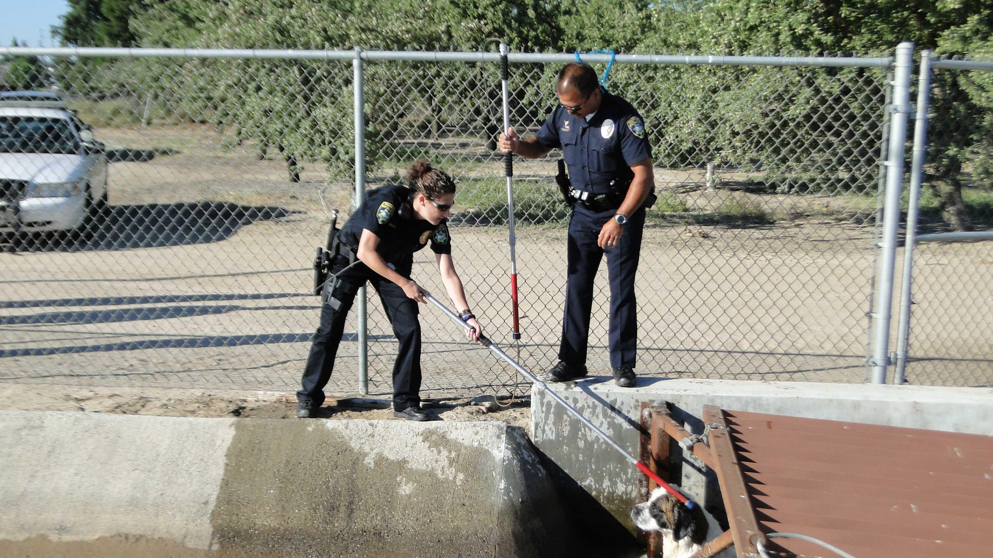 Ripon dog rescue