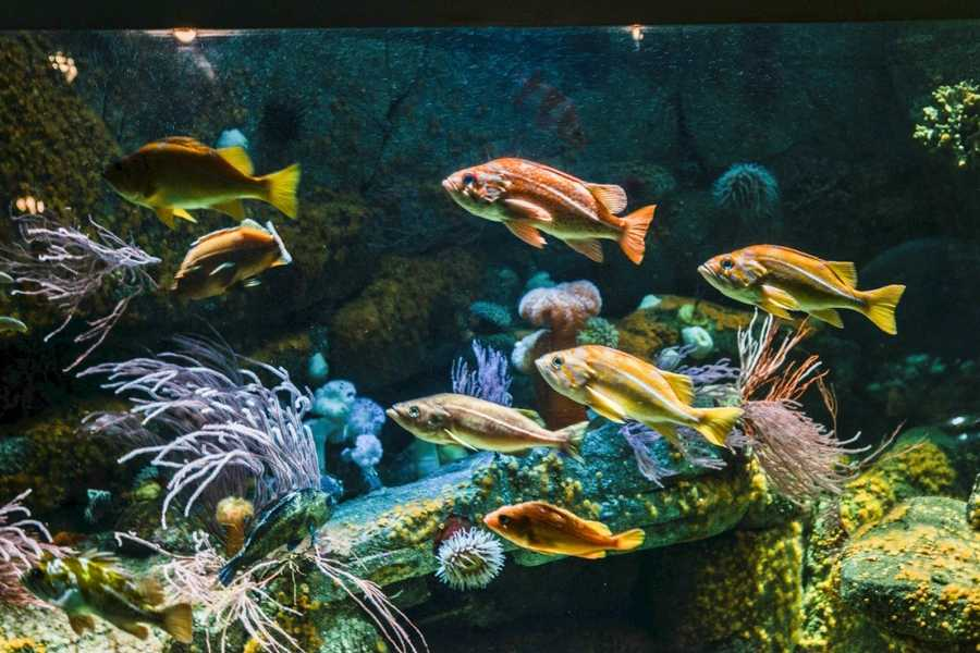 Monterey CountyVisitor-generated sales tax receipts: $64,700,000Things to do: Feed your wonder of the ocean's mysterious creatures at the Monterey Bay Aquarium.