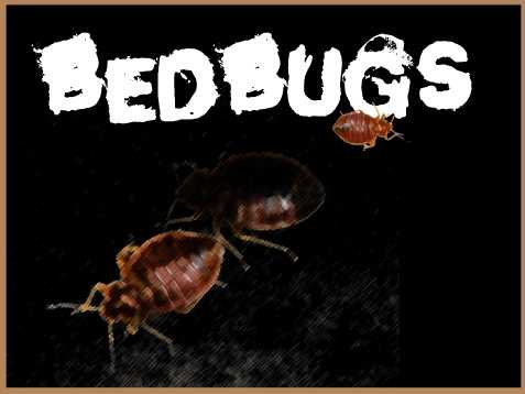 Where does Sacramento rank in cities with the highest increases in bedbug infestations?Source: Terminix