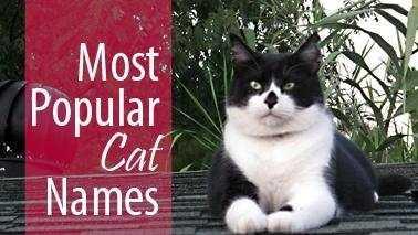 Popular cat names