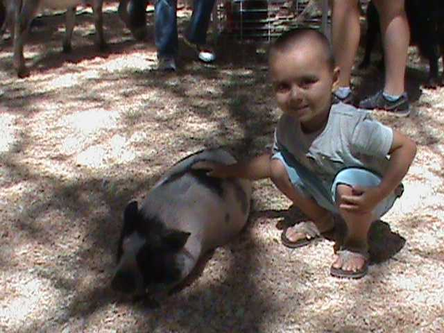 A young boy plays with a pig.