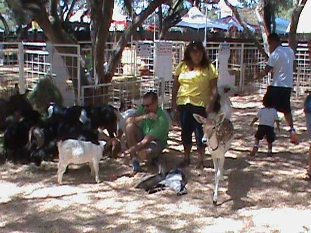 A family stops by the petting zoo.