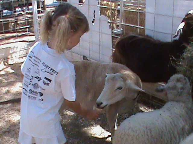 While probably not on a traditional menu for goats, thislittle girl enjoys feeding a waffle cone to the animals.