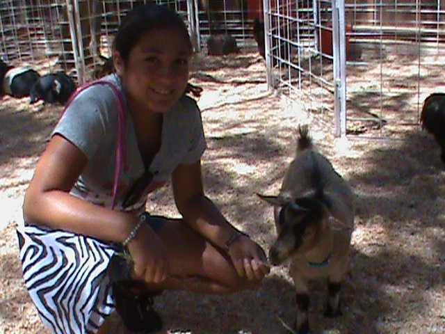 A fun day at the State Fair's petting zoo.