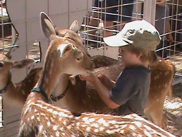 For many kids, this is their first interaction with animals they've only seen in books or on TV. This little boy feeds two deer at the same time!