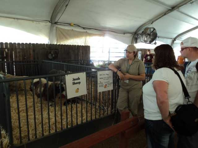 Staff near the animal pens talk about each animal and answer questions.