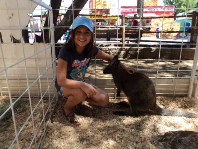 Have you ever had the chance to pet a kangaroo? You can at the California State Fair.