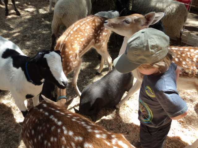 With the past of the California State Fair firmly rooted in livestock and agriculture, it's fitting that animals be a part of the fair experience.