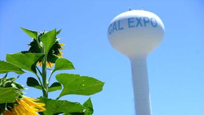 13-Cal Expo.jpg