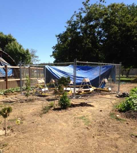 The hole appeared in the Boggs Tract Community Garden and sunk in two fruit trees and an herb garden.