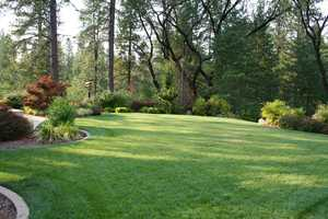 The backyard is well manicured and carpeted with lush, green grass.