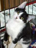 What: Whiskers & Wine 2013Where: Sacramento County Animal ShelterWhen: Sat 6pm-9:30pmClick here for more information on this event.