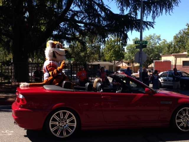 Even Roseville's Tiger rode on the back of a car during the Roseville homecoming parade.