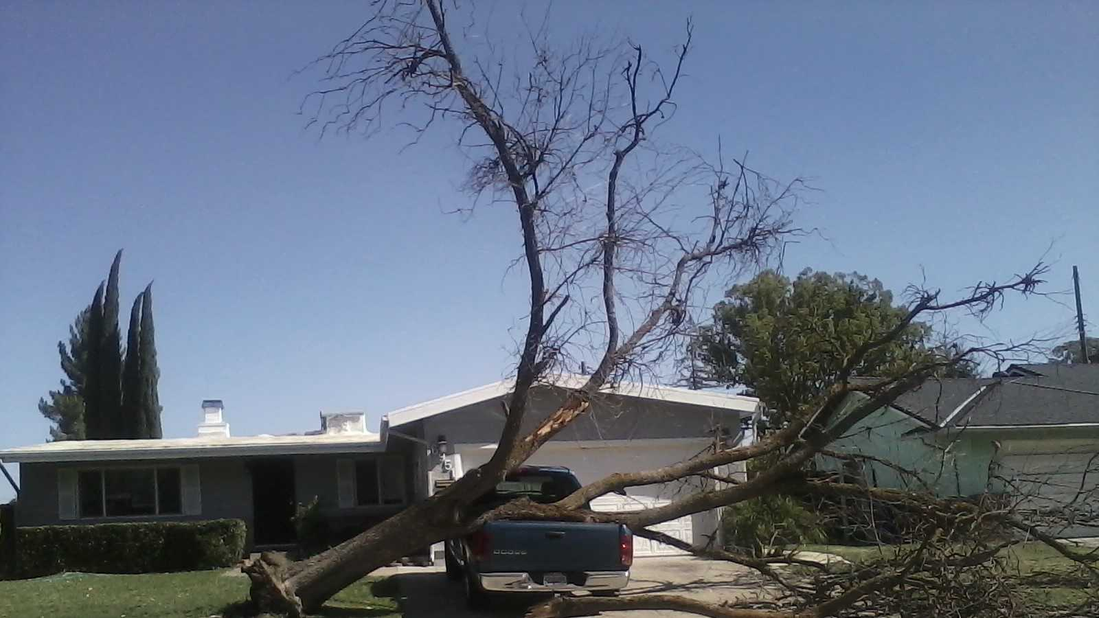 A tree fell on top of a pickup truck on Hogan Drive in Sacramento.