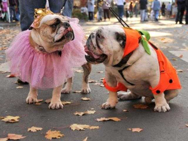What: Midtown Halloween Festival & Pooch ParadeWhere: Marshall ParkWhen: Sat 3pm-6pmClick here for more information on this event.