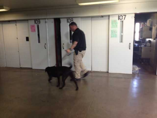 California prison officials will start using Labrador retrievers to help detect contraband that is trying to be smuggled to inmates.