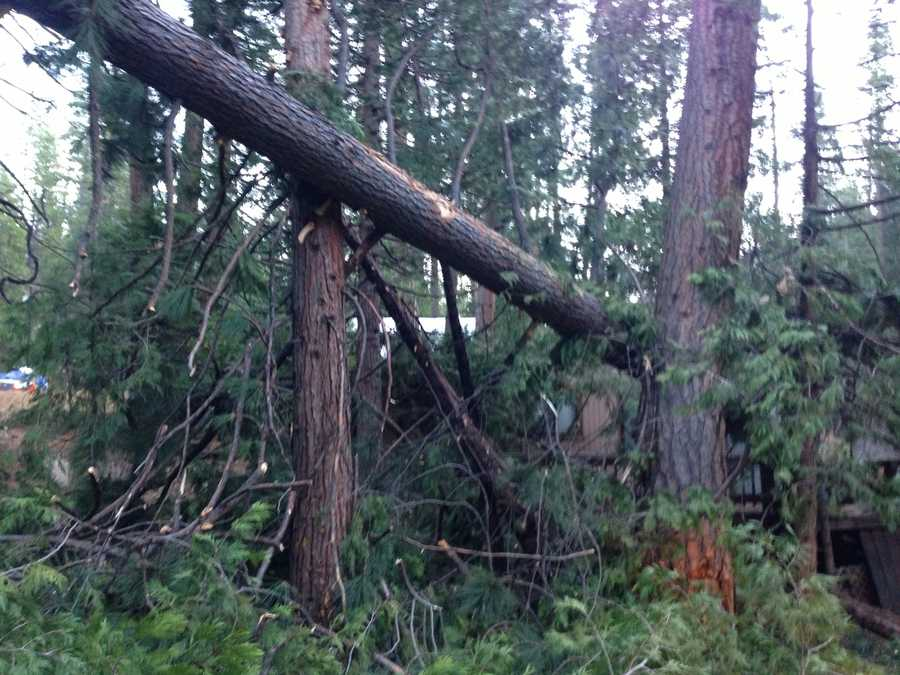 High winds are to blame for a fallen tree that damaged a home, snapped a power line and blocked a lane of Highway 50 near Kyburz. (Nov. 22, 2013)