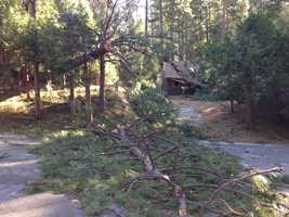 Home damaged by fallen tree in Kyburz. (Nov. 22, 2013)