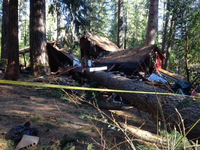 A 100-foot-tall pine tree smashed through a home in Nevada County on Friday, destroying the structure.
