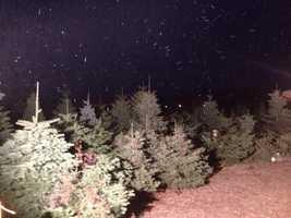 Snow falling at Apple Hill. (Dec. 6, 2013)