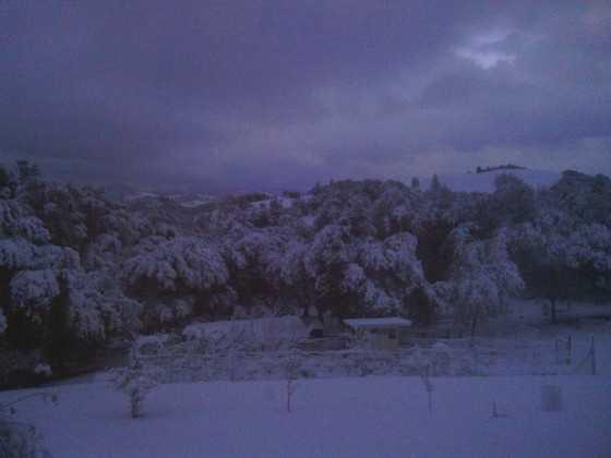 Snow at 1,700 feet. (Dec. 7, 2013)